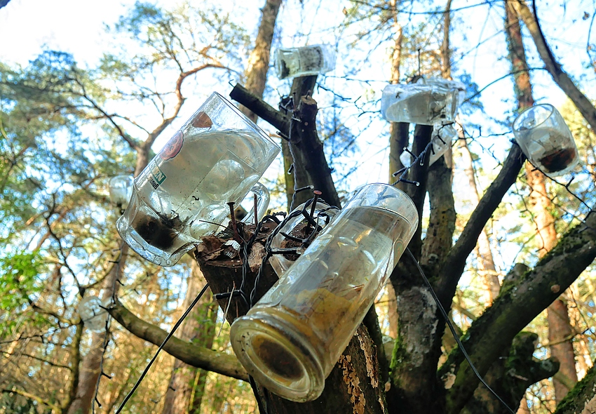 Glaskrüge an gestutztem Baum