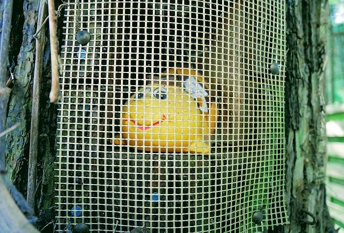 Gelber Fisch hinter Gitter